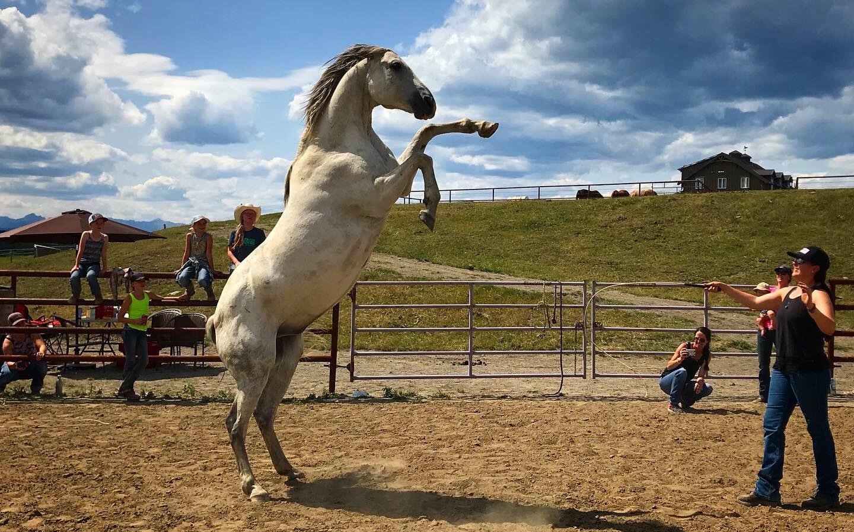 Kim training white stallion